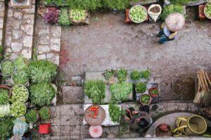 dieta basada en plantas